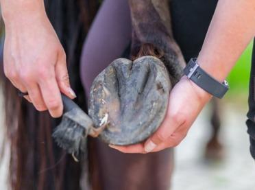 Prawidłowa pielęgnacja kopyt koni