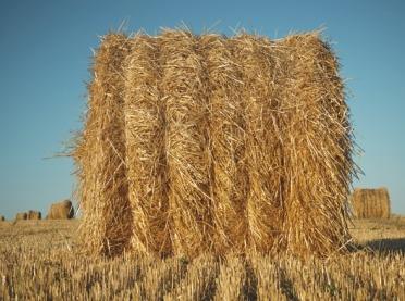 Energetyczne wykorzystanie słomy - jakie korzyści dla rolnika?