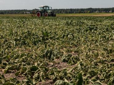 Jak skutecznie walczyć z suszą w uprawach?