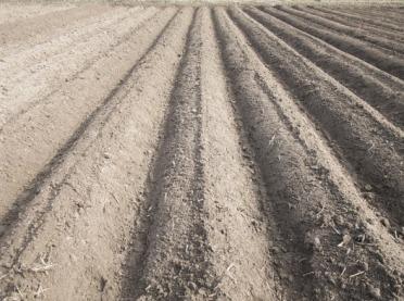 Zasolenie gleb i jego skutki