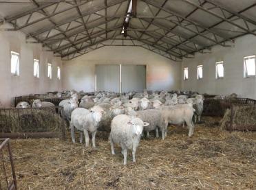 Czy hodowla owiec jest opłacalna?