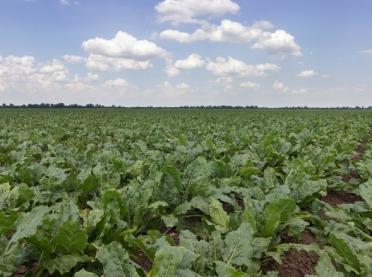 Potas w glebie i w roślinie - jaki ma wpływ na wysokość i jakość plonów?
