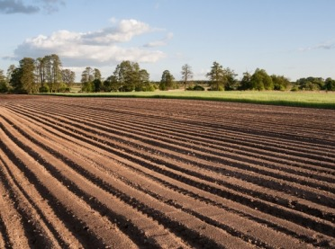 Jak ocenić wartość ziemi uprawnej? – Klasy bonitacyjne gleb