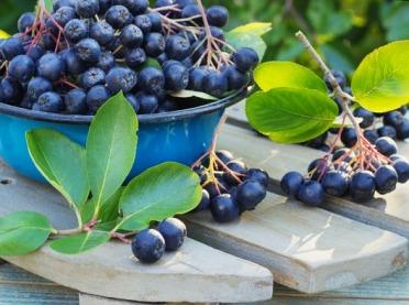 Cierpkie lekarstwo, czyli właściwości zdrowotne aronii