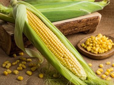 Zdrowa kolba - właściwości zdrowotne kukurydzy