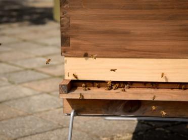 Jak miasto działa na pszczoły?