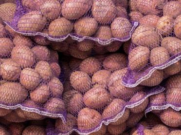 Zasady obrotu ziemniakami - co musi wiedzieć polski rolnik?