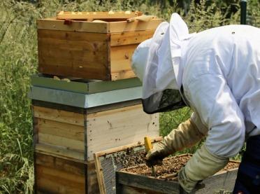 Wyjątkowy wywiad z pszczelarzem Tadeuszem Dussą