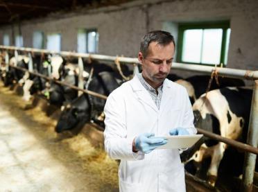 Jakie choroby zwierząt hodowlanych musisz zgłaszać?