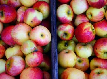 W poniedziałek ruszy interwencyjny skup jabłek przemysłowych