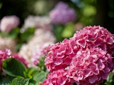 Krzewy, które zakwitną w każdym ogrodzie - z myślą o wiośnie