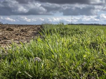 Odporność chwastów na jesienne herbicydy w zbożach
