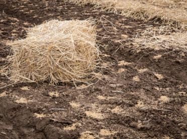 Nawożenie słomą jako alternatywne źródło użyźniania gleby