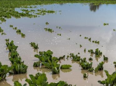Ograniczanie skutków klęsk żywiołowych - ARiMR ogłasza nabór wniosków!