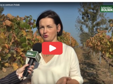 FILM: Bona Terra - wyjątkowa winnica