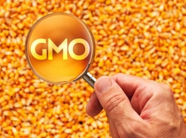 Zakaz GMO w paszach coraz bliżej