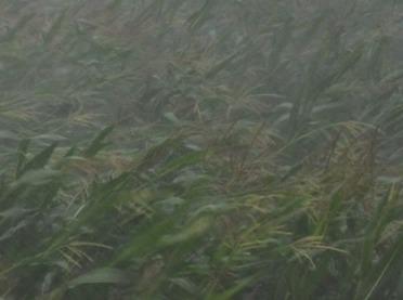 Terminy stosowania nawozów - ministerstwo rolnictwa wyjaśnia!