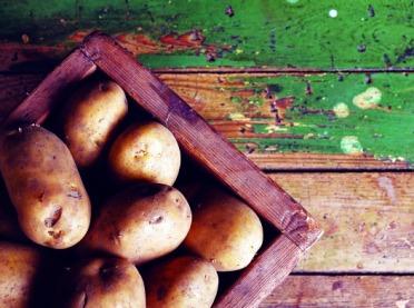 Przechowywanie ziemniaków w kopcach i piwnicach