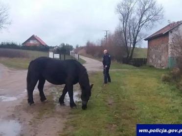 Policyjny pościg za... koniem
