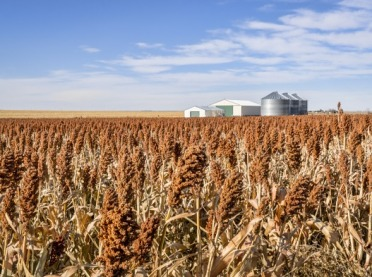Jak wykorzystać uprawy sorgo do produkcji bioetanolu?