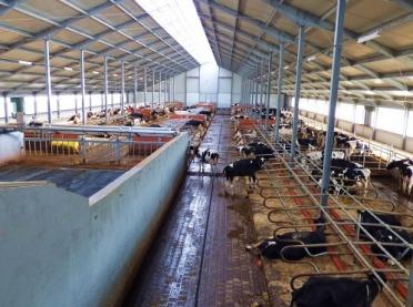 Zanim zima zawita do obory - o co musi zadbać hodowca bydła?