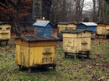 Pszczoły poczuły zimę