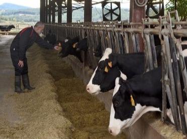Młóto browarniane - na ile warto je stosować w żywieniu bydła?
