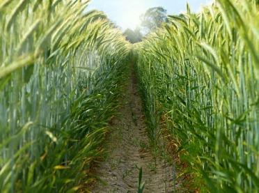 Co z pomocą de minimis dla rolników?