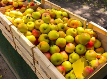 Co trzecie jabłko w UE jest z Polski, ale...