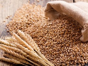 Rynek meksykański już otwarty dla polskiej pszenicy