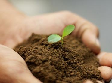 Czy można opatentować rośliny?