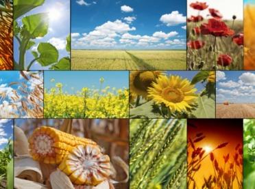Podsumowanie roku 2018 - produkcja roślinna