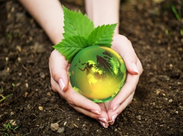 Rok 2020 Międzynarodowym Rokiem Zdrowia Roślin!