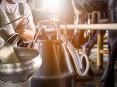 W jakim stopniu jednoczesna produkcja mleka i biogazu polepsza opłacalność hodowli bydła?