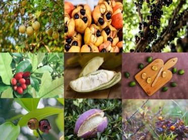 9 owoców tropikalnych, o których nie mieliście pojęcia