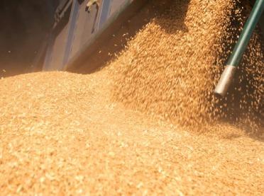 Czy będą dopłaty do nasion kukurydzy i rzepaku?