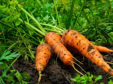 Rolnictwo ekologiczne - jak rozpocząć działalność?