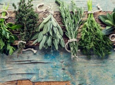 Tradycje zielarskie dawniej i dziś