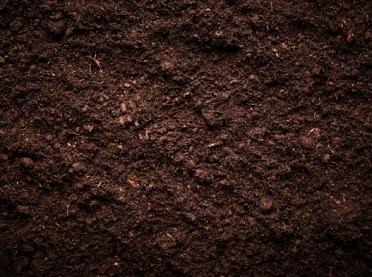 Zawartość próchnicy podstawą żyzności gleb