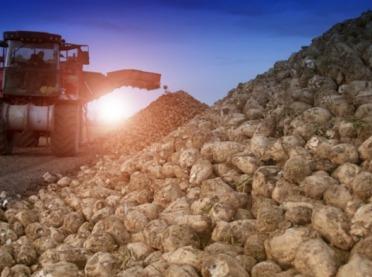 Krajowa Spółka Cukrowa chwali się rekordem
