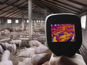 Najnowsze technologie cyfrowe w hodowli trzody chlewnej