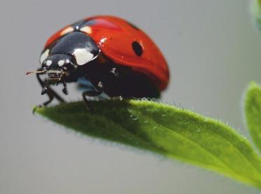 Nie wszystkie owady to szkodniki. Są wśród nich też organizmy pożyteczne