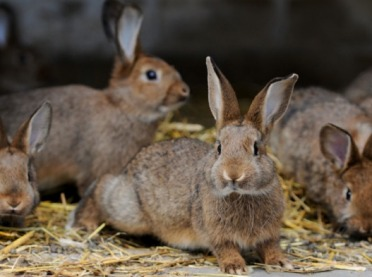 Myślisz o hodowli królików? To świetny pomysł!