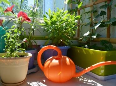 Domowe odżywki do kwiatów doniczkowych