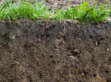 Efektywne mikroorganizmy w glebie