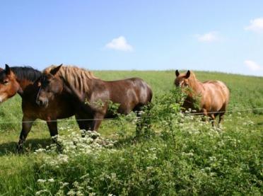 Konie w agroturystyce