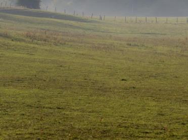 Mieszanki traw na łąki i pastwiska o różnej wilgotności