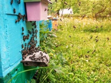 Powiadomienia SMS o zagrożeniach dla pszczelarzy