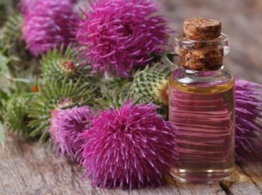 Olejek łopianowy – cudowny eliksir na włosy