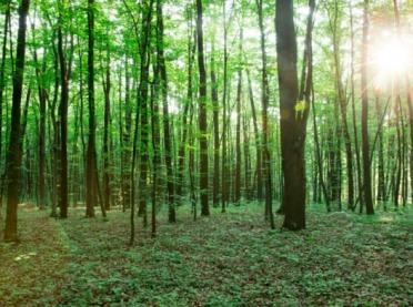 Posadź las - weź pieniądze z PROW! Ostatnie dni na złożenie wniosku!
